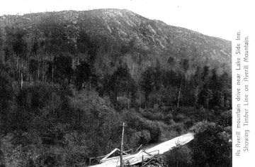 Timber Line on Averill Mountain