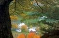 Autumnal View of East Orange