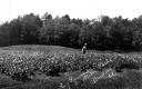 Ray Lyman in Potato Field