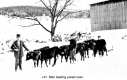 Men Leading Yoked Oxen
