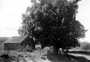 Barn and Tree on Edge of Pasture