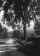 Narrow Dirt Road and Pastures