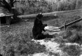 Betsey Bear