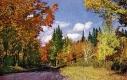 Autumn Road at Oakledge