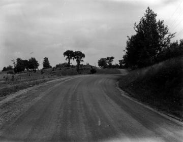 Elm Trees Along A Rural Road