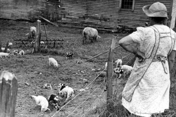 Woman Watching Over the Piglets