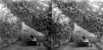 Grape Vine Garden