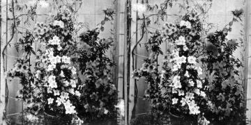 Flowers inside Greenhouse