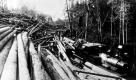 Log Transportation with Train
