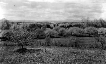 Apple Orchard Near Lake Champlain