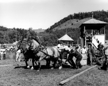Horse Pull at World's Fair