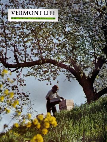 Beekeeping in Pomfret