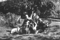 Will S. Monroe and his dogs