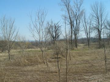 A Field On Shelburne Farms