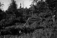 Beaver Meadow Cabin