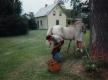 Blacksmith and Horses