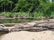 A Fallen Tree on the Little River