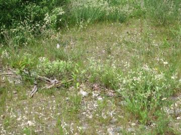 A mixed field near Huntington