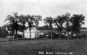 A Row of Elms in Danville