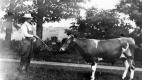 Horace Gleason and bull