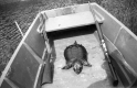 A Deceased Turtle