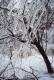 Addison county ice storm