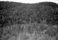 A Forested Hill