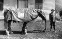 194 Year Old Elephant