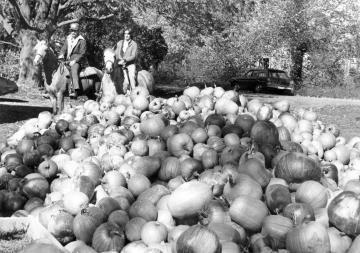 Look at the pumpkins!!