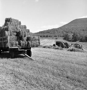 A Hay Cart