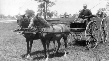 Charles Welch driving ponies