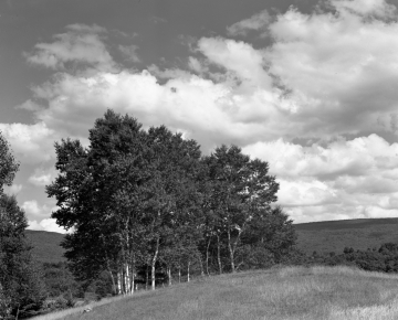 Arlington Landscape