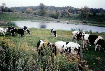 Mears Farm
