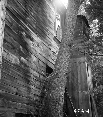 Abandoned Building and Tree
