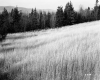 Tall Grass on Slope