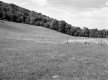 Jamieson Property, Farm Fields