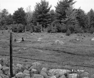 Adams Property, Fenced Field and Forest