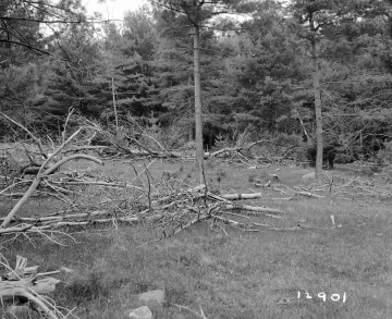 Adams Property, Logging near Forest