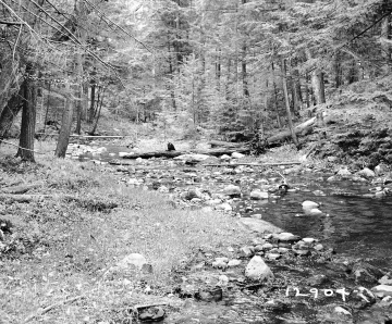 Adams Property, Creek through Forest