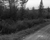 Dirt Road and Conifer Trees on the White Property