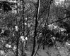Alice Sutkoski Property, Forest in Snow