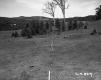 Wood Poles in Meadow